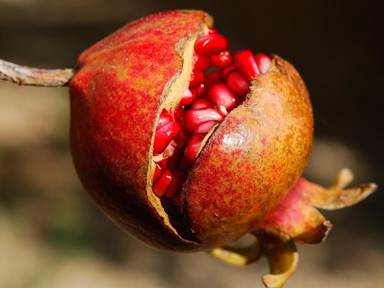 semilla-granada