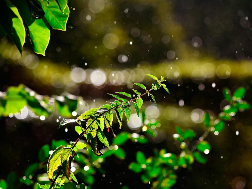 propiedades extracto de ortiga verde